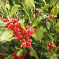 Fira de Santa Llúcia: ¡Que empiece la Navidad!