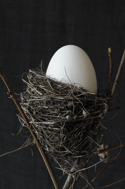 2012-01 Nest_019 Kopie