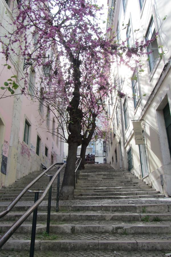 Callejuelas-Lisboa