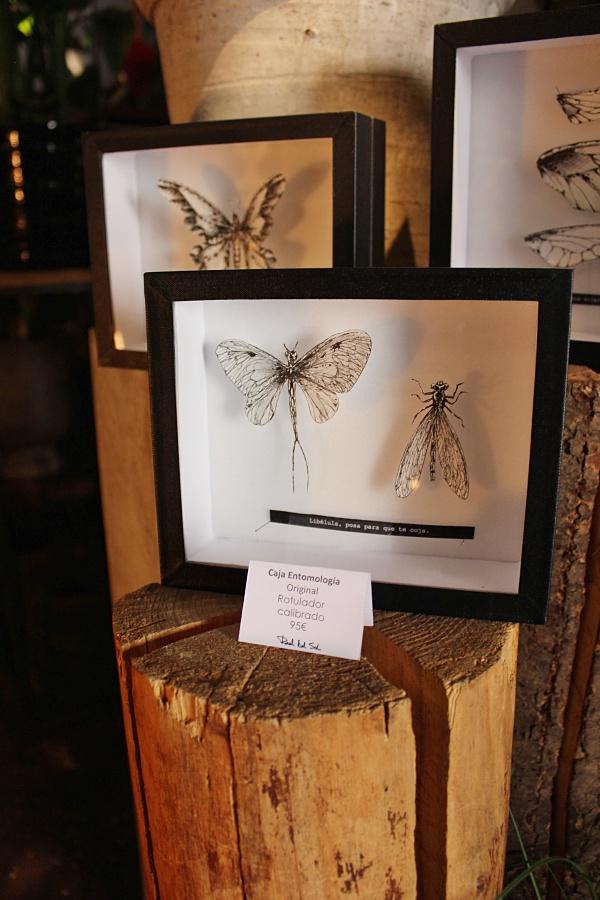 cuadros-entomologia-raul-del-sol