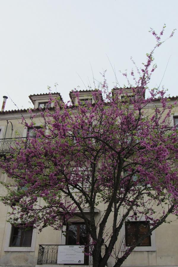 Promavera-en-Lisboa